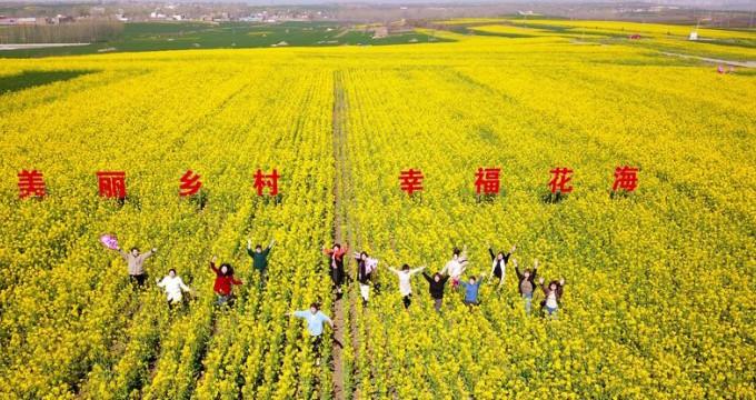 河南汝阳:美丽乡村 幸福花海